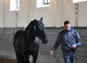 lovarda-felvezetes